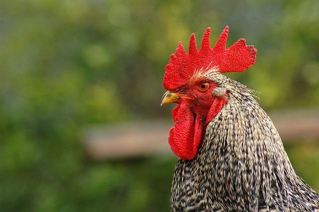 鶏がムーンウォークするADHDの謎の新語創造力というお話