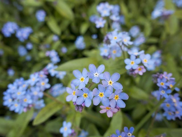 「お花が綺麗だったから」で人をベランダに閉じ込めそうになる発達障害のお話